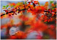 Photography workshop Autumn