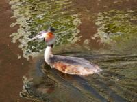 Bird Leiden Canals