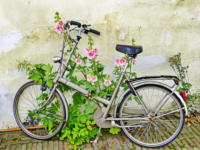 Bike covered in flowers Leiden